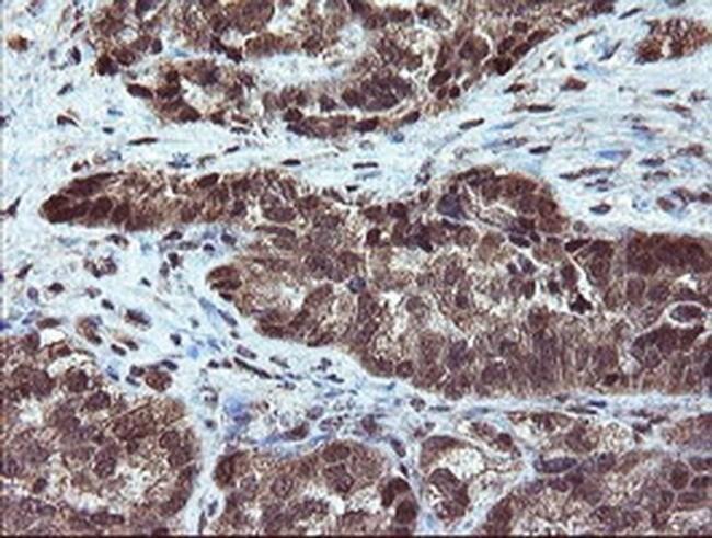 RYBP Mouse anti-Human, Clone: OTI1B2, Invitrogen 100 µL; Unconjugated
