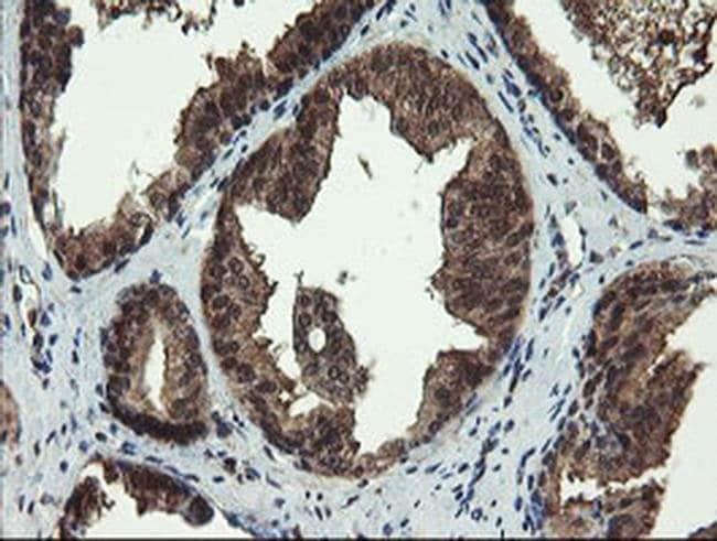 TBCC Mouse anti-Human, Mouse, Non-human primate, Rat, Clone: OTI4C4, Invitrogen