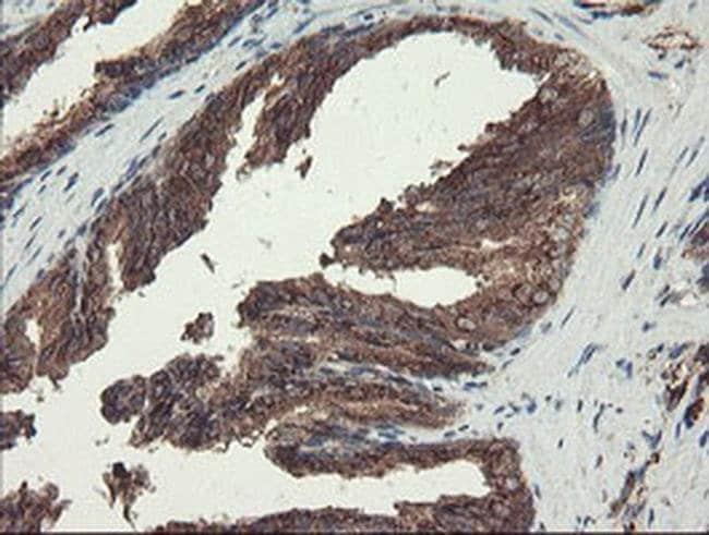 ACBD3 Mouse anti-Human, Clone: OTI5F9, Invitrogen 100 µL; Unconjugated