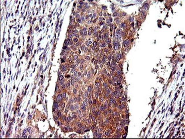CEP68 Mouse anti-Human, Clone: OTI5B4, Invitrogen 100 µL; Unconjugated
