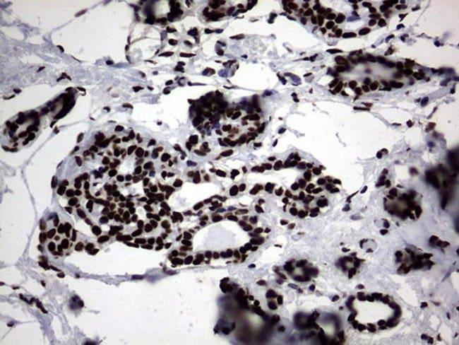 Macro H2A.2 Mouse anti-Human, Clone: OTI1F6, Invitrogen 100 µL; Unconjugated