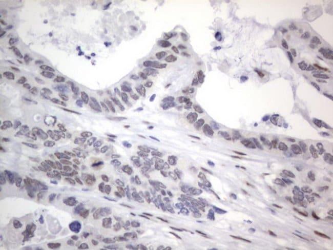 RBFOX1 Mouse anti-Human, Clone: OTI4F9, Invitrogen 100 µL; Unconjugated
