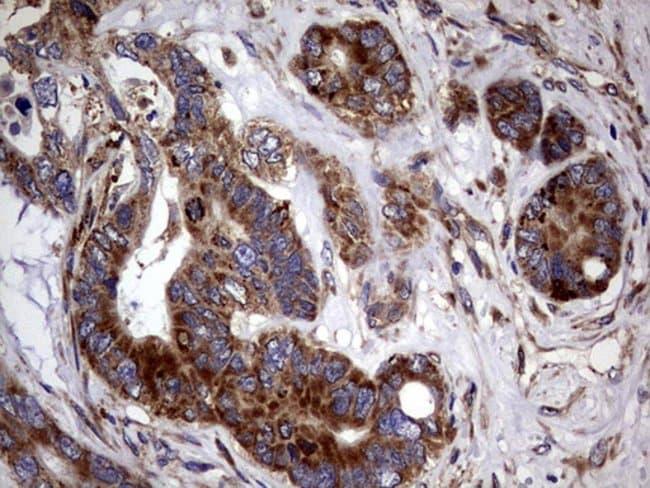 PDE1A Mouse anti-Human, Clone: OTI7D5, Invitrogen 100 µL; Unconjugated