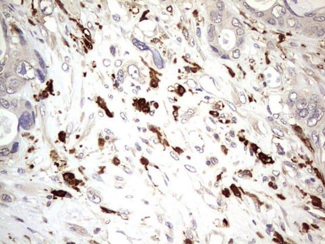 TRIM27 Mouse anti-Human, Clone: OTI4D4, Invitrogen 100 µL; Unconjugated