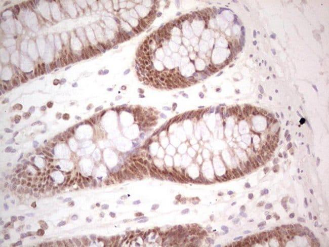 PCBP1 Mouse anti-Human, Clone: OTI3B9, Invitrogen 100 µL; Unconjugated