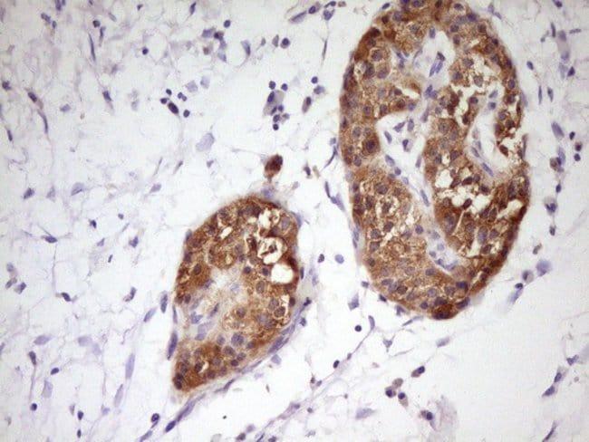 PCBP1 Mouse anti-Human, Clone: OTI3D12, Invitrogen 100 µL; Unconjugated