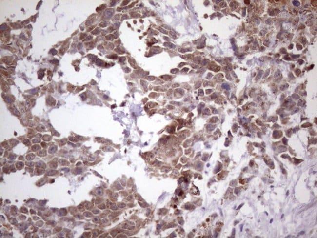 NUP43 Mouse anti-Human, Clone: OTI7G10, Invitrogen 100 µL; Unconjugated