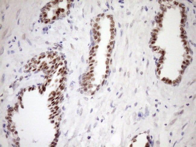 WTAP Mouse anti-Human, Clone: OTI12G6, Invitrogen 100 µL; Unconjugated
