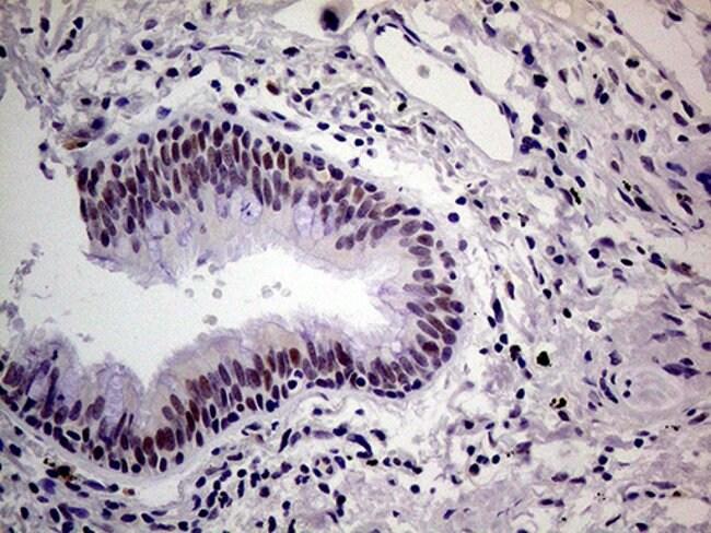 THOC3 Mouse anti-Human, Clone: OTI4H6, Invitrogen 100 µL; Unconjugated