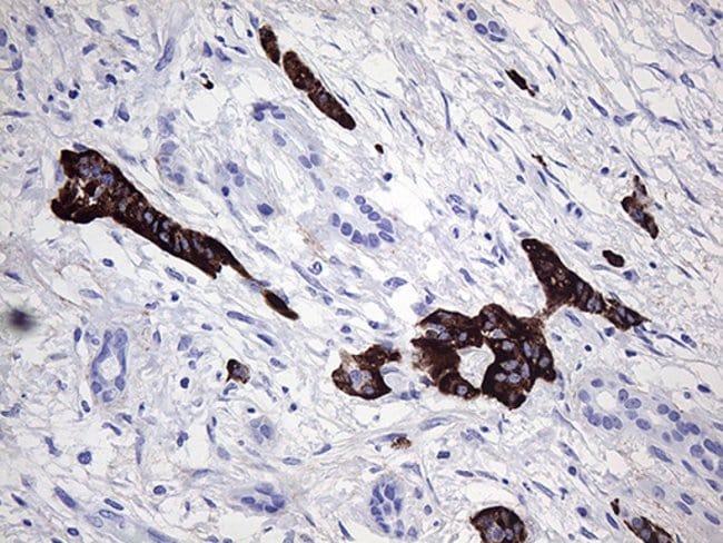 ZRANB1 Mouse anti-Human, Clone: OTI7A3, Invitrogen 100 µL; Unconjugated