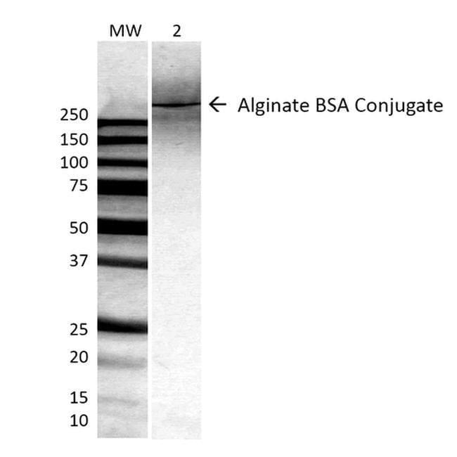 Alginate Mouse anti-Chemical, Clone: 4B10-1C5, Invitrogen 100 µg;