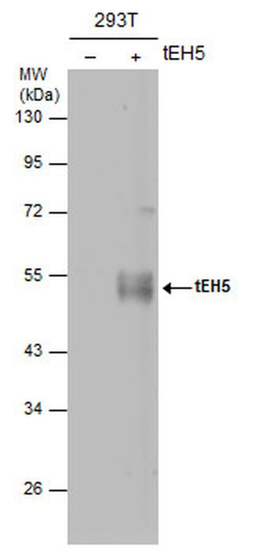 Influenza A H5N1 HA Mouse anti-Virus, Clone: 1D10, Invitrogen 100 µL;