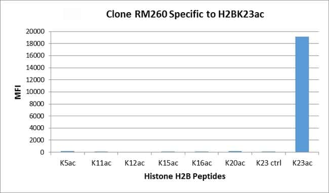 Acetyl-Histone H2B (Lys23) Rabbit anti-Human, Invitrogen 100 µg; Unconjugated
