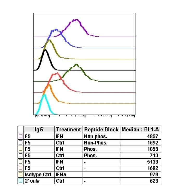 Phospho-NDRG1 (Thr346) Rabbit anti-Human, Invitrogen 200 µL; Unconjugated