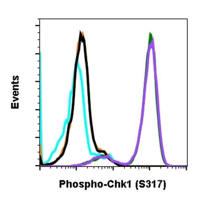 Phospho-CHK1 (Ser317) Rabbit anti-Human, Mouse, Invitrogen 200 µL;