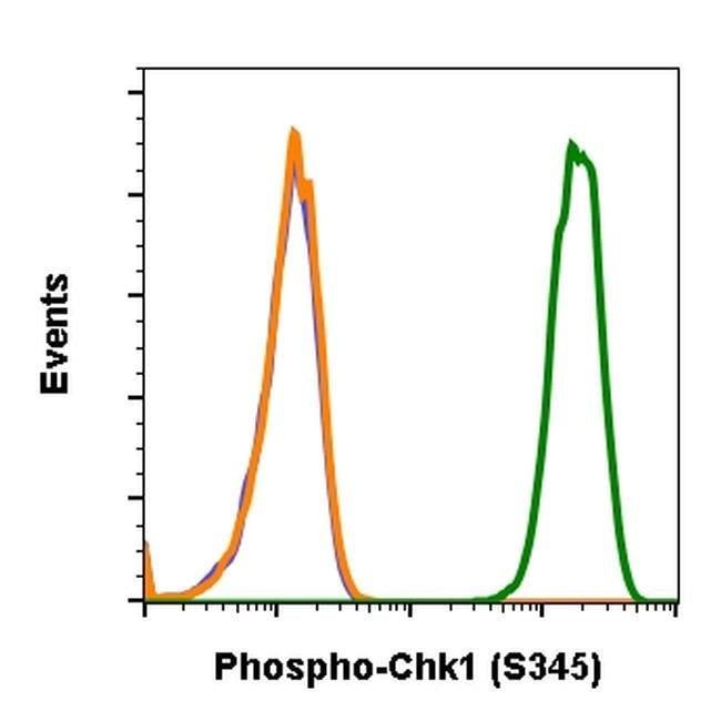 Phospho-CHK1 (Ser345) Rabbit anti-Human, Mouse, Rat, Invitrogen 200 µL;