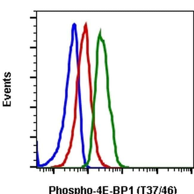 Phospho-4EBP1 (Thr37, Thr46) Rabbit anti-Human, Mouse, Rat, PE, Invitrogen