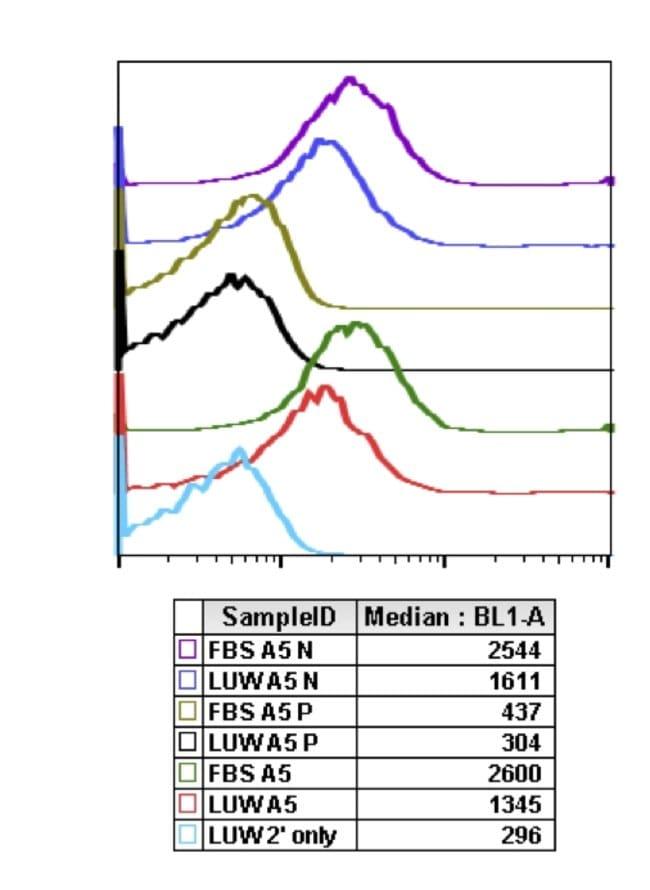 Phospho-4EBP1 (Thr37, Thr46) Rabbit anti-Human, Mouse, Rat, Invitrogen