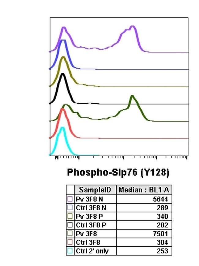 Phospho-SLP76 (Tyr128) Rabbit anti-Human, Mouse, Invitrogen 200 µL;