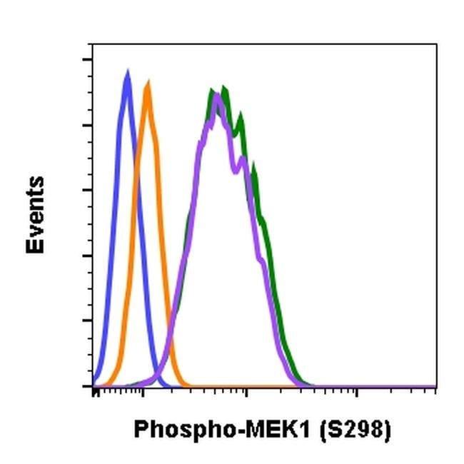 Phospho-MEK1 (Ser298) Rabbit anti-Human, Mouse, Rat, Invitrogen 200 µL;