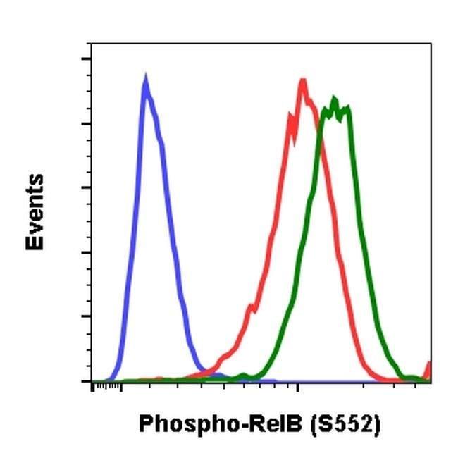Phospho-RelB (Ser552) Rabbit anti-Human, Mouse, Invitrogen 200 µL;