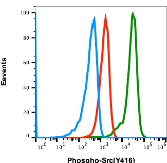 Phospho-SRC (Tyr416) Rabbit anti-Human, Mouse, Invitrogen 200 µL;