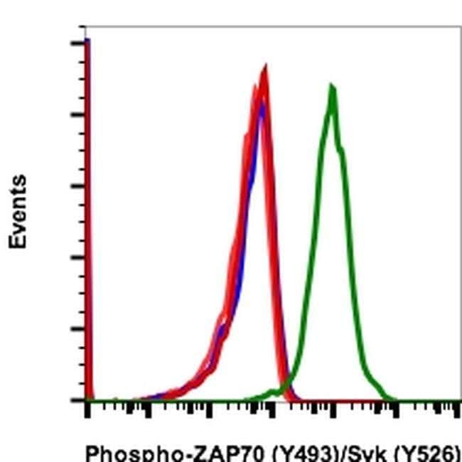 Phospho-ZAP70/Syk (Tyr493, Tyr526) Rabbit anti-Human, Mouse, FITC, Invitrogen