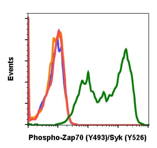 Phospho-ZAP70/Syk (Tyr493, Tyr526) Rabbit anti-Human, Mouse, Invitrogen