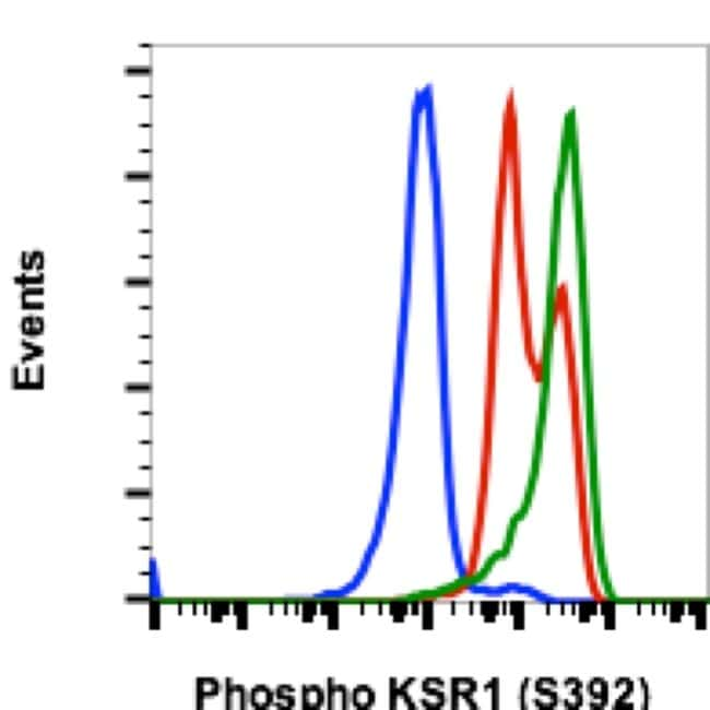Phospho-KSR1 (Ser392) Rabbit anti-Human, Mouse, Invitrogen 200 µL;