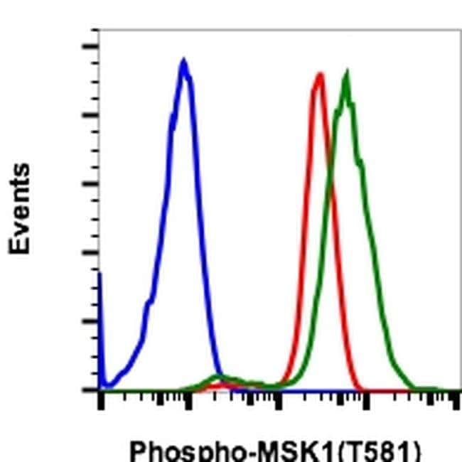 Phospho-MSK1 (Thr581) Rabbit anti-Human, Mouse, Rat, Invitrogen 200 µL;