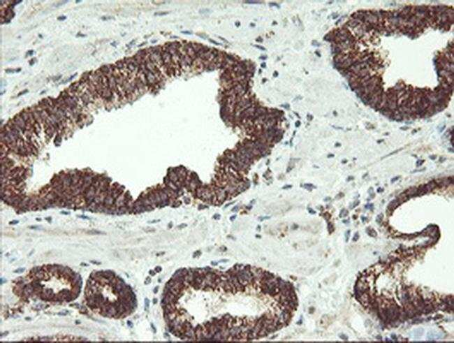 MAOA Mouse anti-Human, Clone: OTI2F10, liquid, TrueMAB  100 µL; Unconjugated