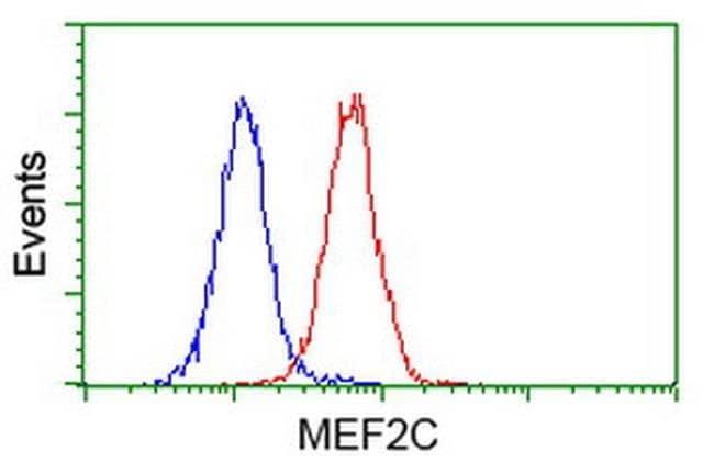 MEF2C Mouse anti-Human, Clone: OTI4B10, liquid, TrueMAB  30 µL; Unconjugated