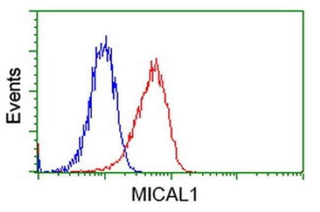 MICAL1 Mouse anti-Human, Clone: OTI4A1, liquid, TrueMAB  100 µL; Unconjugated