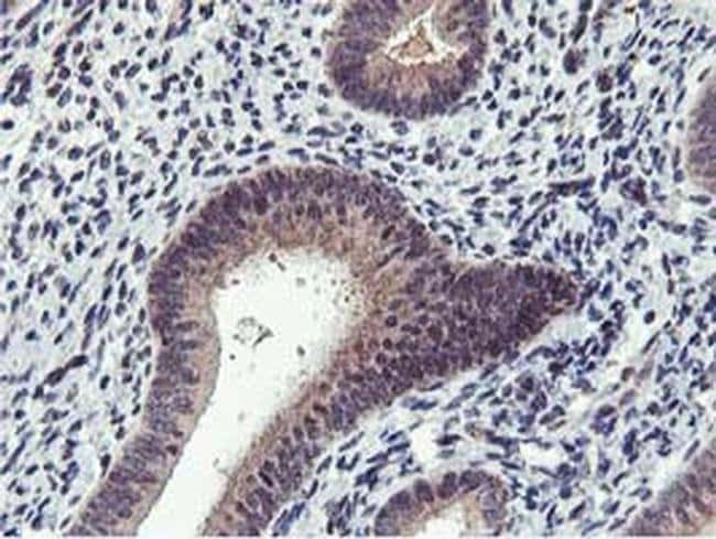 MIER2 Mouse anti-Human, Clone: OTI3G7, liquid, TrueMAB  100 µL; Unconjugated