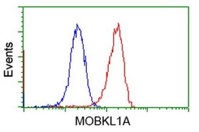 MOBKL1A Mouse anti-Human, Clone: OTI1F6, liquid, TrueMAB  100 µL;