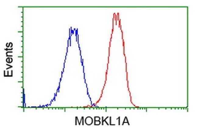 MOBKL1A Mouse anti-Human, Clone: OTI1H2, liquid, TrueMAB  100 µL;