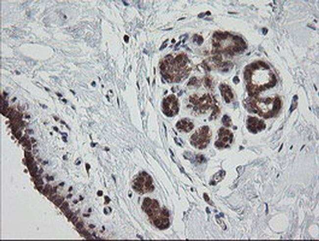 MRPS34 Mouse anti-Human, Clone: OTI1H2, liquid, TrueMAB  100 µL; Unconjugated