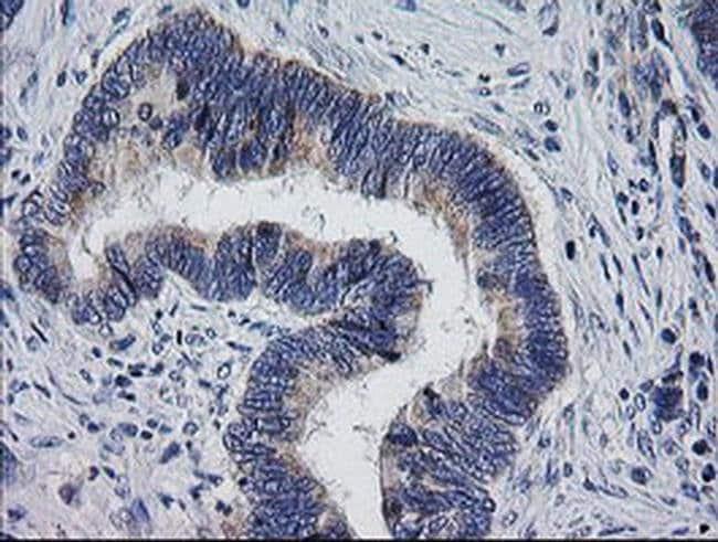 MRPS34 Mouse anti-Human, Clone: OTI4C9, liquid, TrueMAB  100 µL; Unconjugated