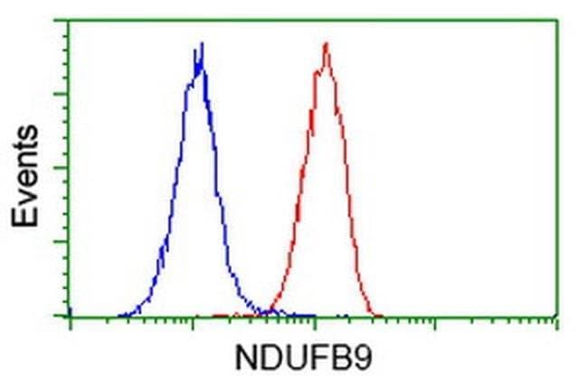NDUFB9 Mouse anti-Human, Clone: OTI8B7, liquid, TrueMAB  100 µL; Unconjugated