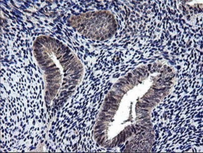 NEK11 Mouse anti-Human, Clone: OTI5D9, liquid, TrueMAB  100 µL; Unconjugated