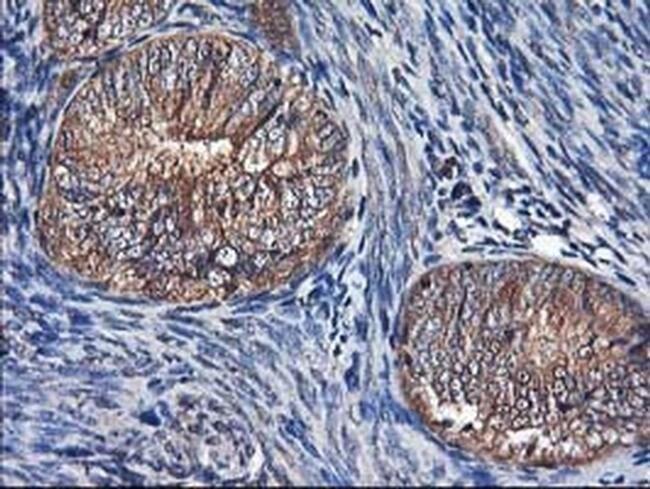 NIF3L1 Mouse anti-Human, Clone: OTI4B5, liquid, TrueMAB  100 µL; Unconjugated