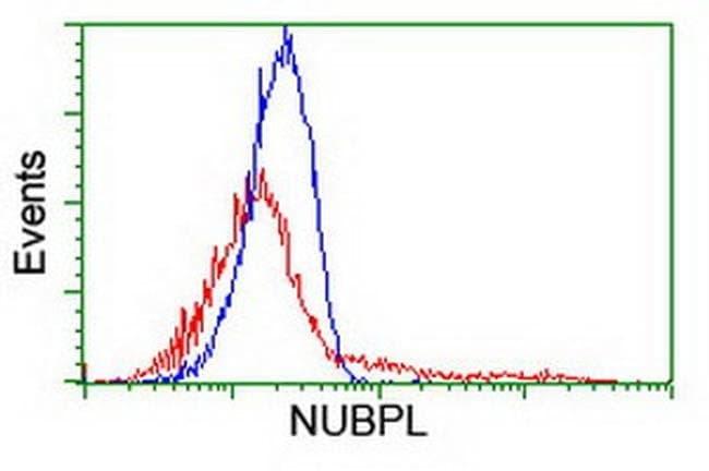 NUBPL Mouse anti-Human, Clone: OTI7D6, liquid, TrueMAB  100 µL; Unconjugated