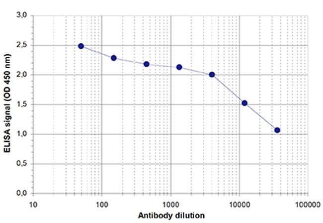 ZBTB38 Rabbit anti-Human, Polyclonal, Invitrogen 100 µL; Unconjugated
