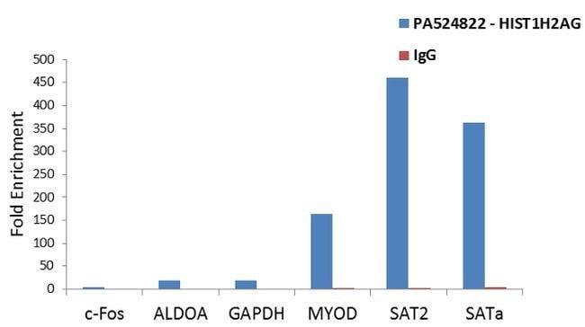 HIST1H2AG Rabbit anti-Human, Polyclonal, Invitrogen 400 µL; Unconjugated