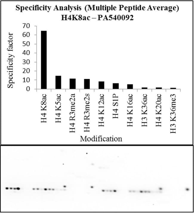 Acetyl-Histone H4 (Lys8) Rabbit anti-Human, Mouse, Polyclonal, Invitrogen