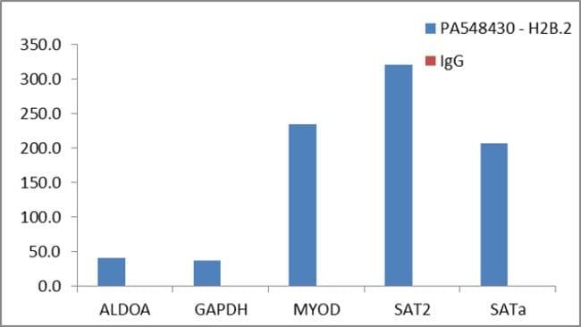 Histone H2B.2 Rabbit anti-Human, Mouse, Polyclonal, Invitrogen 400 µL;