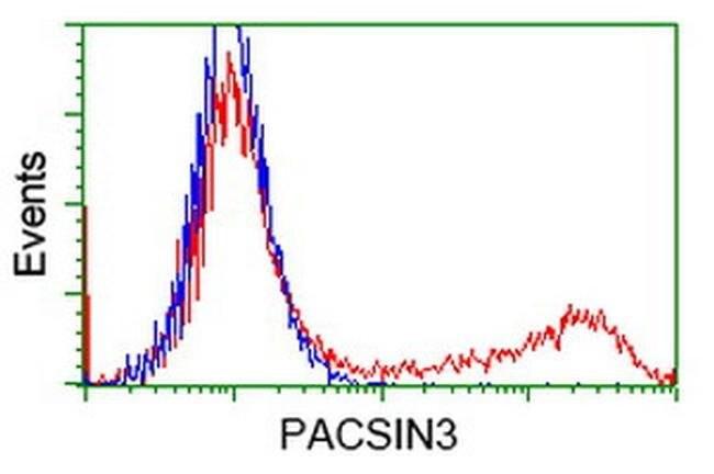 PACSIN3 Mouse anti-Canine, Human, Rat, Clone: OTI4G7, liquid, TrueMAB