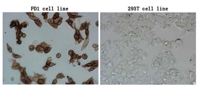 PDCD1 Mouse anti-Human, Clone: OTI8H7, lyophilized, TrueMAB  100 µg;