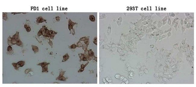 PDCD1 Mouse anti-Human, Clone: OTI22A9, lyophilized, TrueMAB  100 µg;