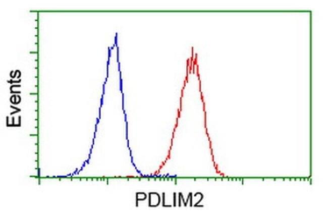PDLIM2 Mouse anti-Human, Clone: OTI11A12, liquid, TrueMAB  100 µL;